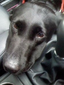 Photo of Dusty in the Footwell
